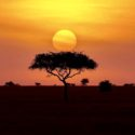 Out of Africa (Some Exciting News about My Latest Trip)