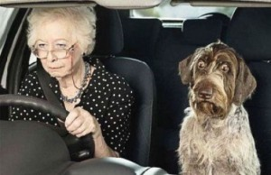 P Pet Old Lady and Dog