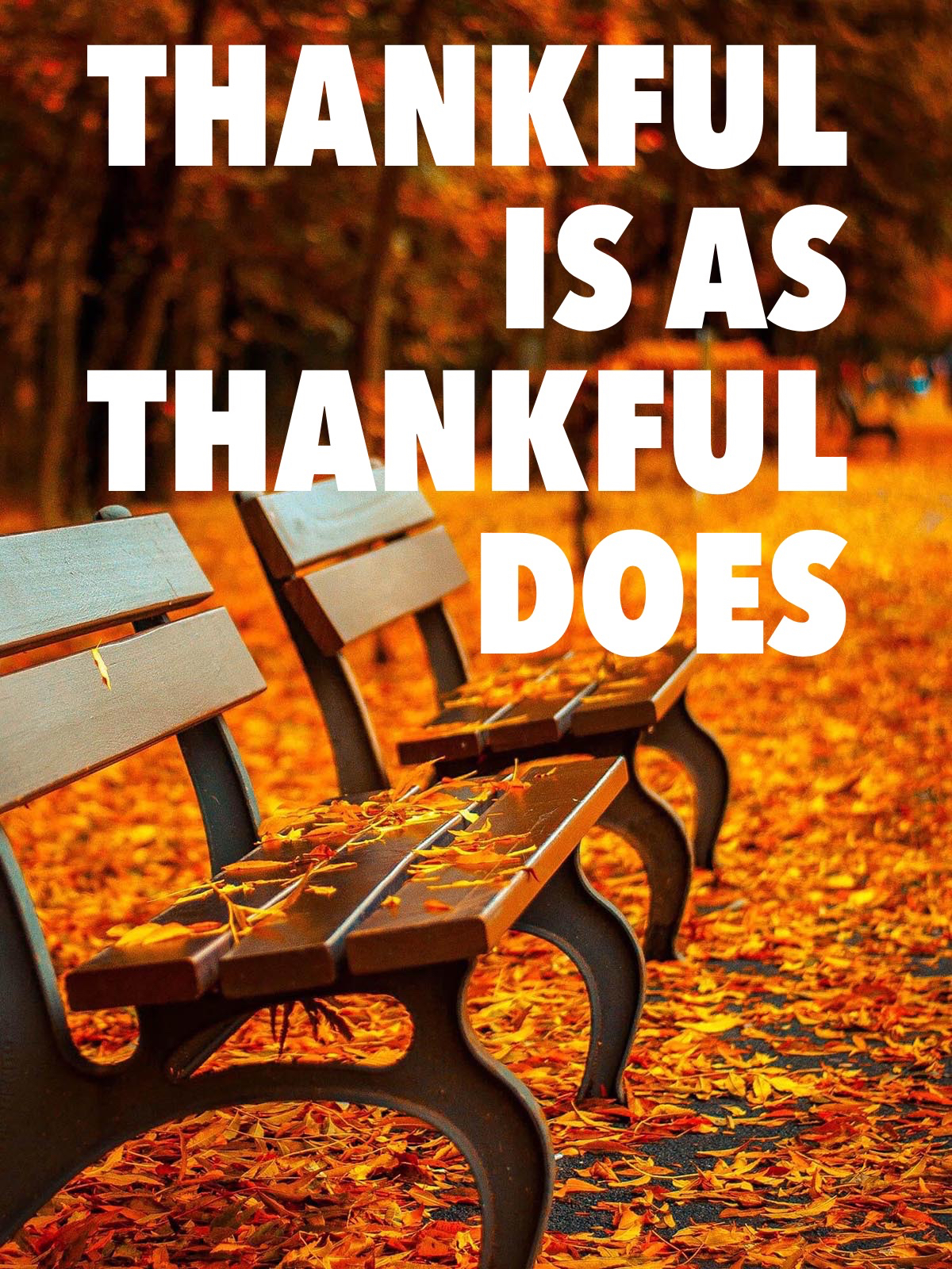 thankful-pic