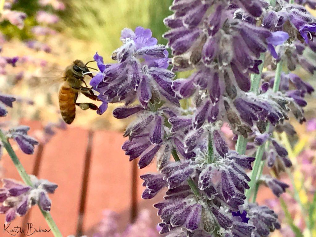 Bee-1504136101397